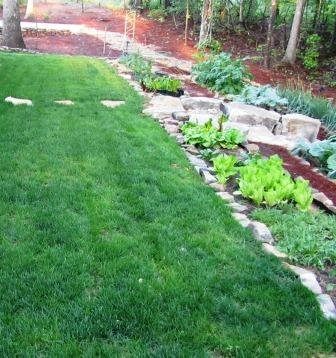 how to grow grass how to plant grass seed