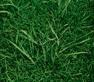 How to kill crabgrass look a likes for Soil 7 days to die