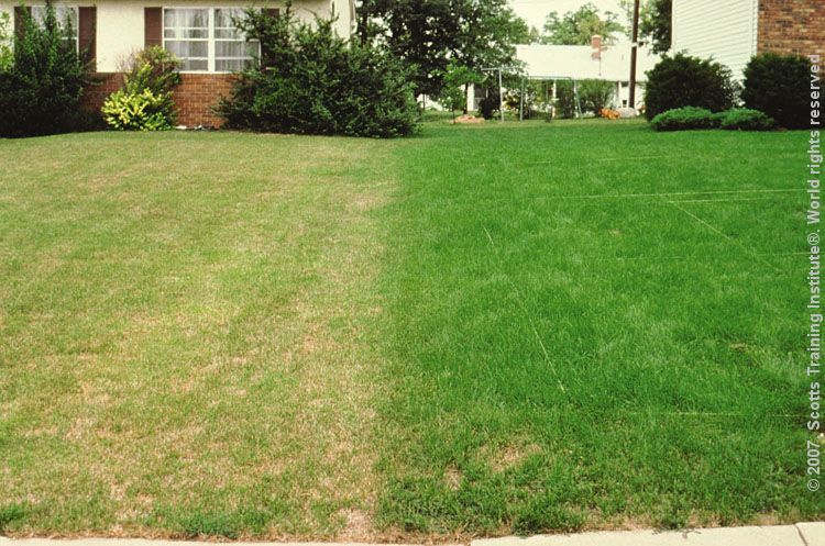 Lawn insect damage lawn that needs feeding and has insect damage next