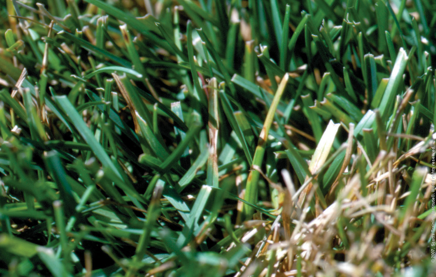 How To Repair a Bare Patch in Your Lawn - The Spruce