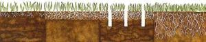 This illustration shows that root depth is restricted by both compacted soil (far left) and too much thatch (2nd from left).  Feed your lawn after aerating.  The result is improved root growth as shown in the far right illustration.