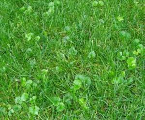 How Late Can You Kill Lawn Weeds In Fall Tips And