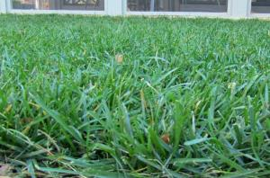 I mow my Tall Fescue/Ky Bluegrass lawn at around 3 inches (after the cut)