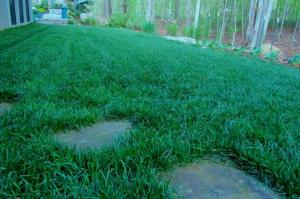 Folks have been giving me compliments on my Scotts Heat Tolerant Blue lawn this spring.
