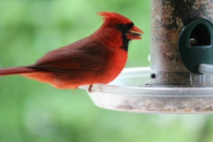 """The show never ends, especially since all of our """"bird plantings"""" are supplemented by year-round bird feeding stations."""