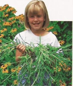"This photo of a mature crabgrass plant appeared in a Scotts publication about 20 years ago.  The caption:  ""A single seed produced this monster crabgrass plant, which crowded out good grass as it grew.  Each plant is capable of producing tens of thousands of seeds for an even bigger problem next year."""