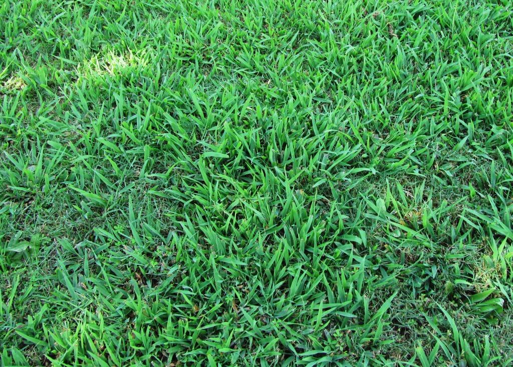Getting Rid Of Dallisgrass Tips And Tricks For A Greener Thumb
