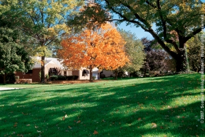 Feeding your lawn in fall helps to make your lawn thicker with stronger roots.