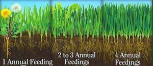 Four feedings a year will help make your lawn thicker, give your grass stronger roots, and help your grass compete with weeds.