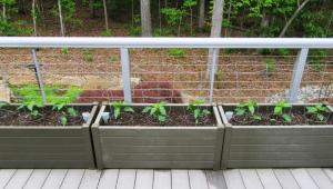 We planted 3 pepper plants in each planter on April 30 (click photo to enlarge)
