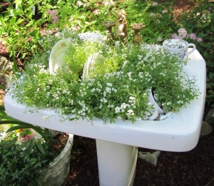 This old sink with a few plates thrown in serve as a planter for sweet-smelling Alyssum.  (Click photo to enlarge)