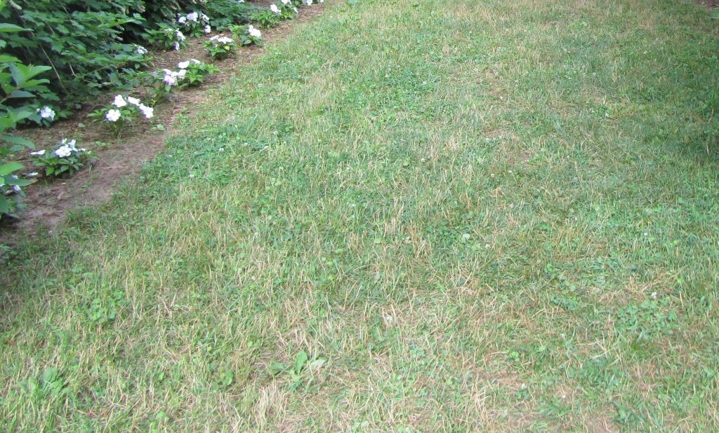 How To Kill And Replace Your Lawn Tips And Tricks For A Greener