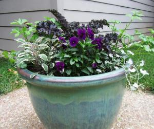 Last year we planted a Flowering Kale in the center, with 2 plants each of Purple Viola, Tricolor Sage, Italian Parsley and Silver Falls Dichondra. (Click photo to enlarge)