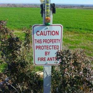 fire ant sign