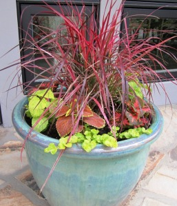 "We planted a ""Fireworks"" Fountain Grass in the center, 2 each of three different Coleus and 3 yellow Creeping Jenny"