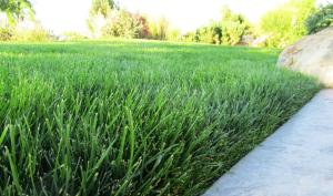The best grass varieties will have less weed, disease and insect problems.