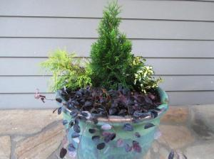 This year we planted an Emerald Green Arborvitae 'Smaragd' in the center (Zone 4 to 8) surrounded by a Wintercreeper 'Moonshadow' (Zone 4 to 9), a Golden Threadleaf False Cypress 'Filifera Aurea' (Zone 4 to 8), and a Weeping Loropetalum 'Purple Pixie' (Zone 7 to 10) Click photo to enlarge