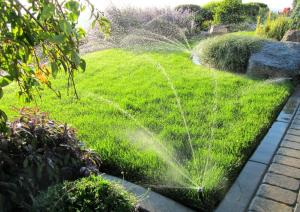 A half inch of irrigation twice a week helps to create deeper roots.  Daily watering encourages shallow roots.